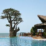 Entre piscine et océan ; le gros baobab