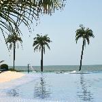 la piscine, les palmiers et l'océan