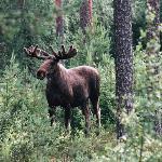 Wild Sweden - Day Tours