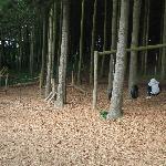 Woodland Playarea 2