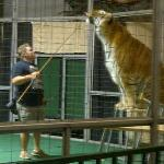 The entertaining animal tricks show with former circus animals.