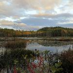 Quincy Bog in the Fall