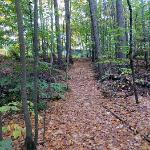 Leaf-strewn path