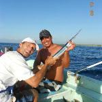 baby sailfish released back into the ocean