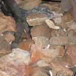 Trash in fire pit