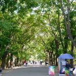 Streets are lined with bushy trees.
