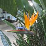 Flower at entrance