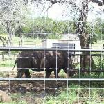 San Antonio Wildlife Ranch