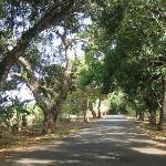 Auf dem Weg nach Makunduchi