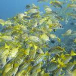 ダイビング・・・綺麗な海で、大量の魚の群れが見れます!