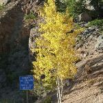 The aspen begin to change