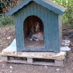 Resident Doggie