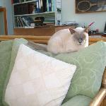 Motty the cat relaxes in the conservatory.