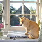 Paddington Cat in the window of the Honeysuckle Room.