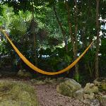 hammocks are everywhere to sit in!