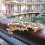 A weird mushroom on the balcony
