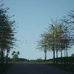 Beautiful drive up to Asara
