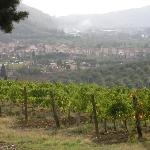 The vineyard with the town of Sieci below