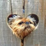 Doggie Friendly!