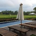 The pool amidst the paddy field