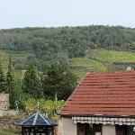 vignes de coteaux