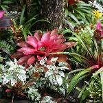Glorious gardens and bromeliads
