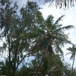 élimination des noix de coco dangereuses pour les lézardeurs