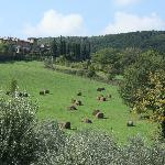View of the Surrounding Tuscan Countryside