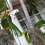 orchids @ the swimming pool