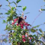 Local wildlife, on the plants