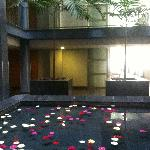 Hotel flower pool... Beautiful fresh gerbera flowers gently floating in the water jets