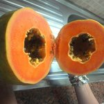 papaia omaggio