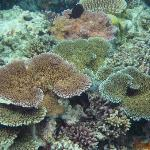 Surviving coral
