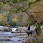 Laural Creek Trail