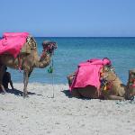 Kamelreiten erwünscht