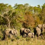 Elephant conference