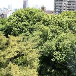 部屋からは庭と緑が眺められる