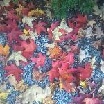 Gorgeous tree dropped artificial looking leaves on the pebble path.