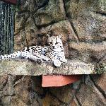 Wildlife Preserve at Club Rio