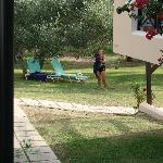 Heerlijk liggen onder de olijfbomen naast het zwembad