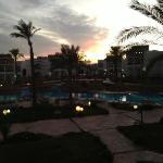 Gardenia at sunset