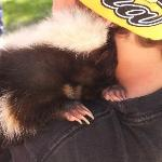 adorable skunk