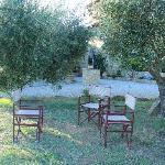 propriété entourée d'oliviers