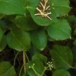 Paros_Moth Park
