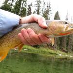 Wyoming Cutthroat