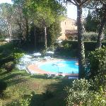 Pool from olive grove