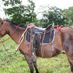 Uno de los caballos de Cielo Roto