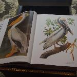 Audubon's book of birds on the coffee table - my Granny's fav, the Brown Pelican