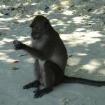 Monkey seen on the Phi Phi island tour.