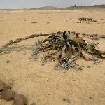 Welwitschia Plains, A Scenic Drive